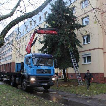 Stadtfelder Weihnachtsbaum aufgestellt – Ein erfolgreicher Tag mit einigen Überraschungen