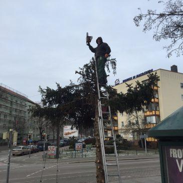 Weihnachtsbaum am Wilhelmstädter Platz wieder abgebaut