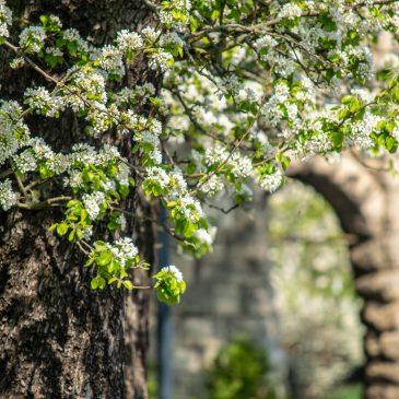 Der Frühling ist zurück – auch in Stadtfeld